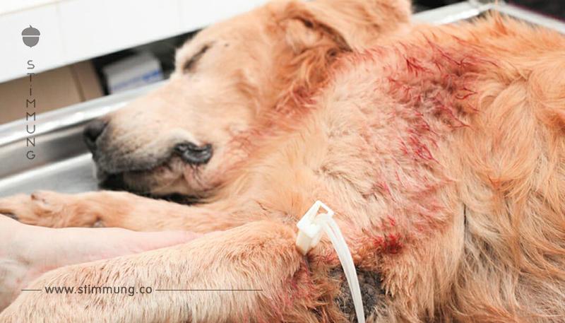 Polizeiwarnung: Wahnsinniger vergiftet Hunde – hinterlässt gefährliche Leckerli in der Natur