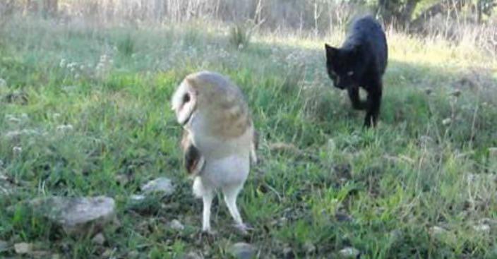 Diese Katze schleicht sich an die Eule heran – was dann passiert, überrascht jeden