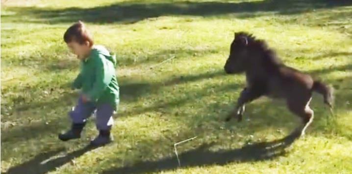 Ein kleines Pony verfolgt das Kleinkind – was danach passiert, lässt unser Herz dahinschmelzen!