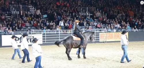 Dieses Pferd hört sein Lieblingslied und nickt seinem Besitzer zu   Das Publikum ist begeistert