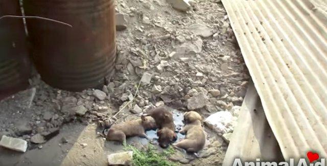Kleine Welpen stecken im Harz fest. Sie weinten hoffnungslos, konnten aber nicht raus, plötzlich hörten sie ihr Weinen ...