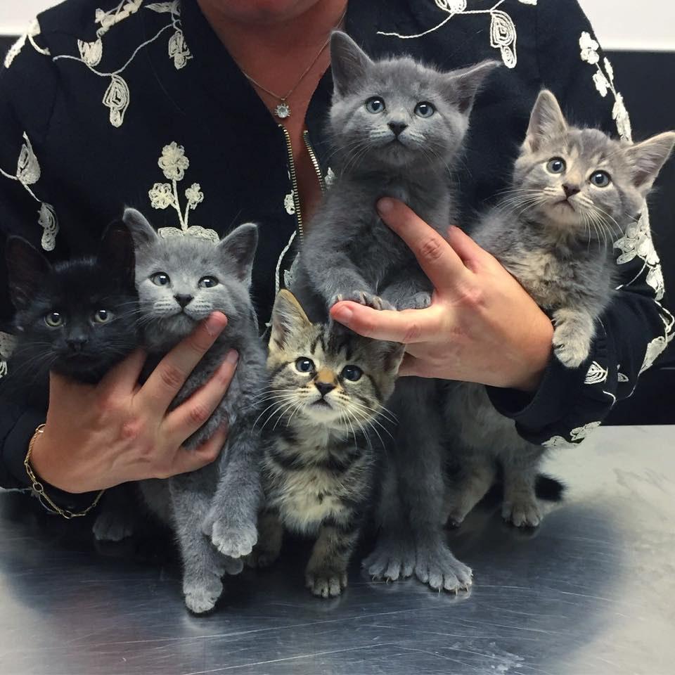 Der Mann hat einige Kätzchen gefunden, die rausgeworfen worden waren. Er brachte sie nach Hause und sah, warum sie so grausam behandelt wurden ...