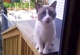 Die Katze schimpfte seine Besitzerin und wurde zum Star des Internets. Schau nur, wie wütend sie ist!