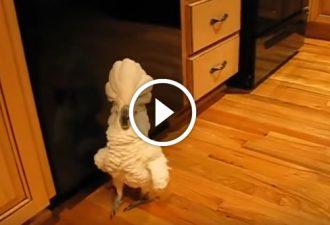 Der Besitzer wollte mit dem Kakadu ein Video drehen. Seine Reaktion überraschte alle!