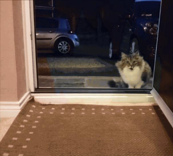 Am Abend sah er eine Katze an seiner Tür. Sie möchte klagend ins Haus und der Junge ließ sie gehen. Aber die Katze kam nicht mit leeren Pfoten ...