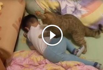 Das Kind weinte, und die Reaktion der Katze, es ist etwas!