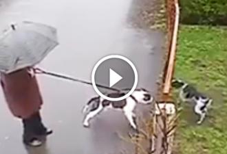 Der große Hund kletterte auf den kleinen Hund. Sie werden überrascht sein zu sehen, WER zu seiner Rettung kam!