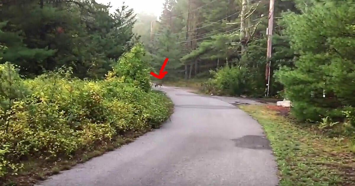 Hund benimmt sich eigenartig und rennt in den Wald: Herrchen erkennt sofort die Gefahr