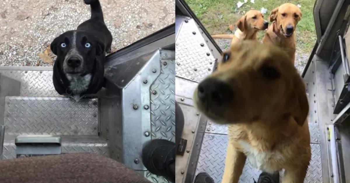 15 Hunde, die bis über beide Ohren in den Postboten verliebt sind.