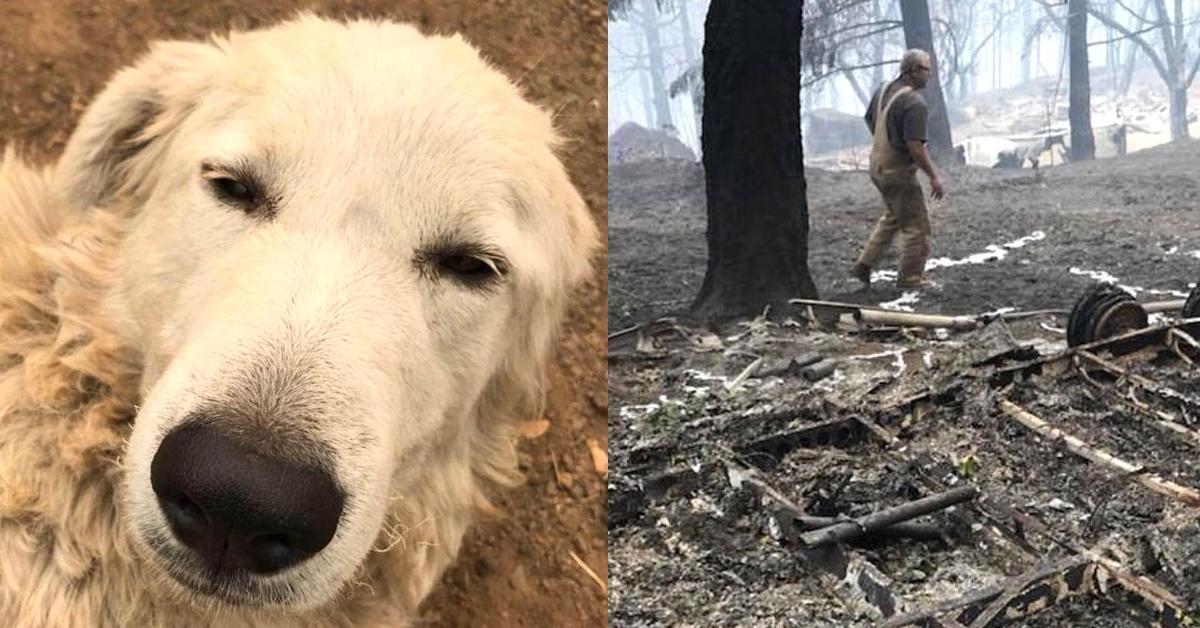 Hund rennt in Waldbrand Inferno, um Tiere zu retten.