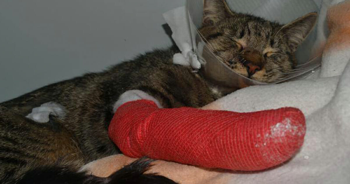 Mann, 27, wirft hilflose Katze aus dem Fenster – wird aus unfassbarem Grund freigesprochen