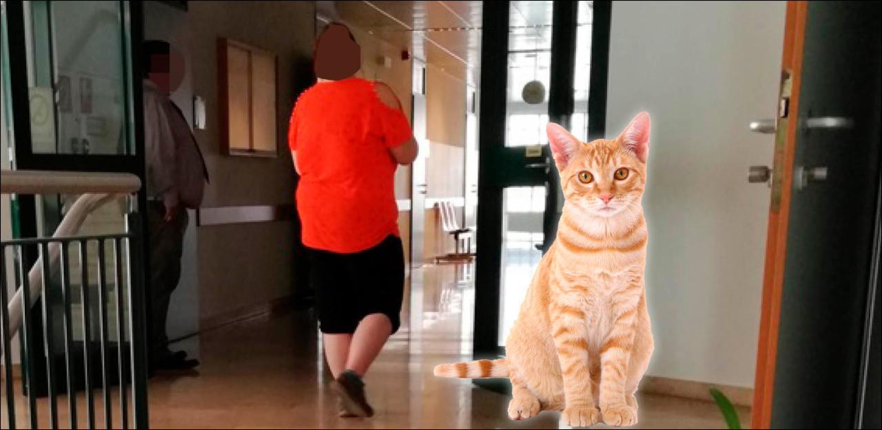 2 Katzen fast verhungert, 1 Tier tot: Frau (22) verurteilt