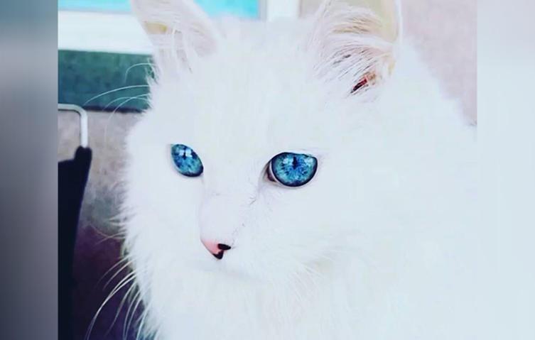 VIDEO: Ist das die Katze mit den schönsten Augen der Welt? Einfach faszinierend!