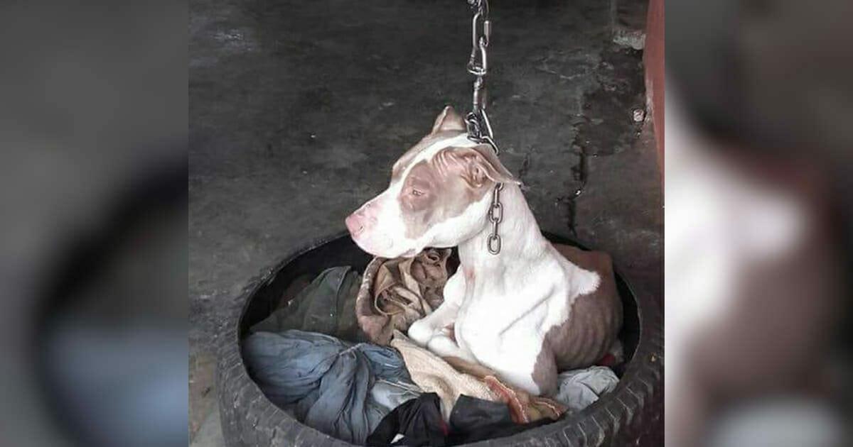 Hilfloser Hund ist angekettet, kann Kopf nicht senken – dann tut ein Tierretter das einzig Richtige