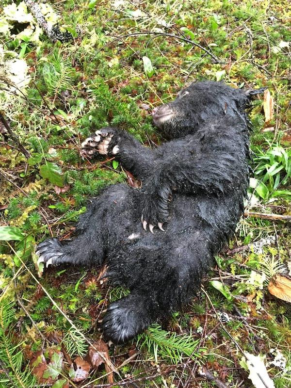 Er riskierte sein Leben und seine Freiheit, einen sterbenden Teddybären zu retten!