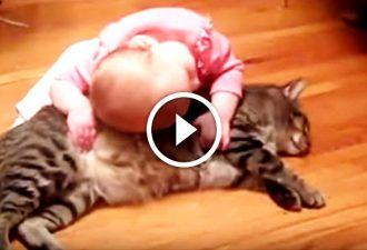 Ein kleines Mädchen lag auf der Katze, die Reaktion der Katze ist einfach fantastisch!