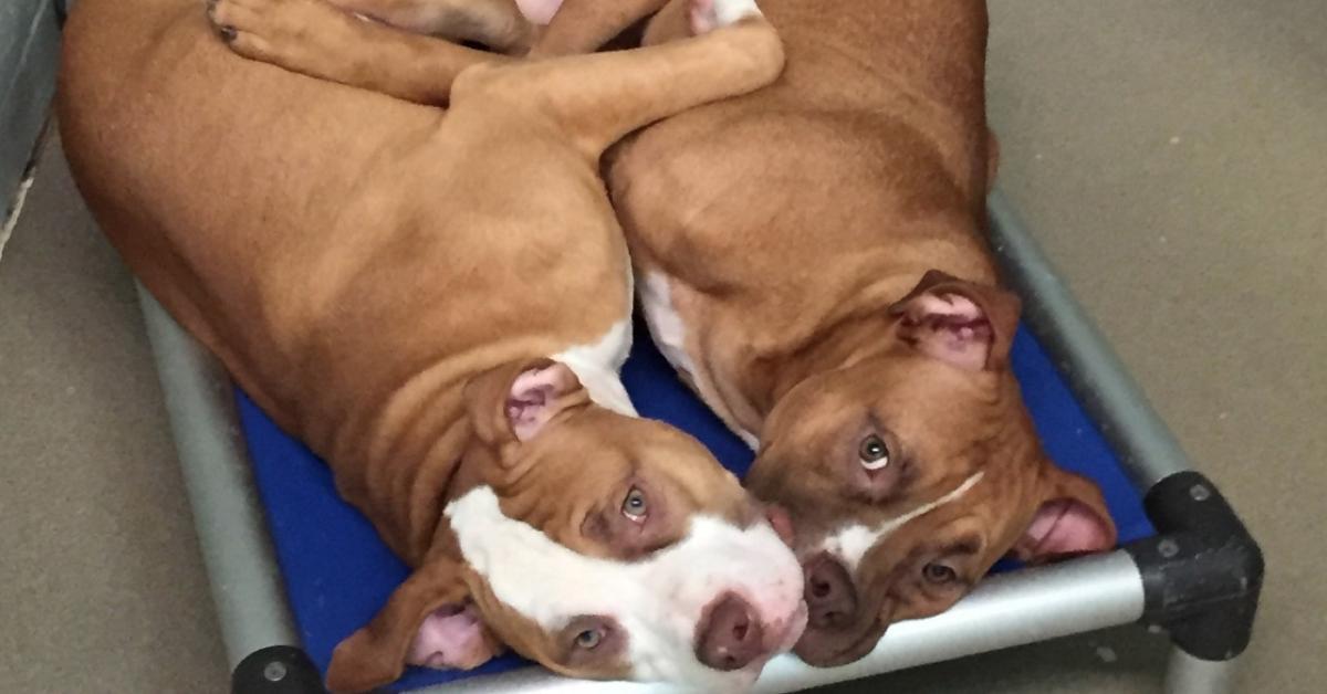 Unzertrennliche Hunde-Brüder finden gemeinsames Zuhause.