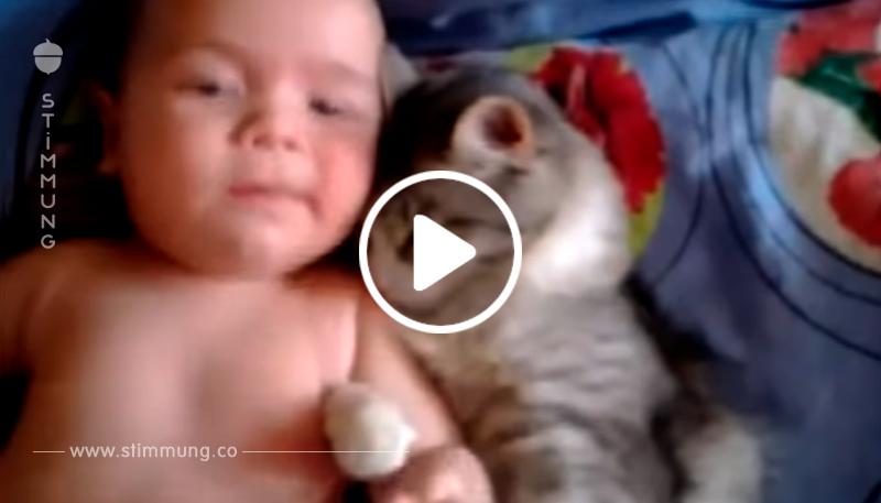 Die Katze liebt dieses Kind mehr als jeder andere. Ein Paar, das dein Herz stehlen wird!