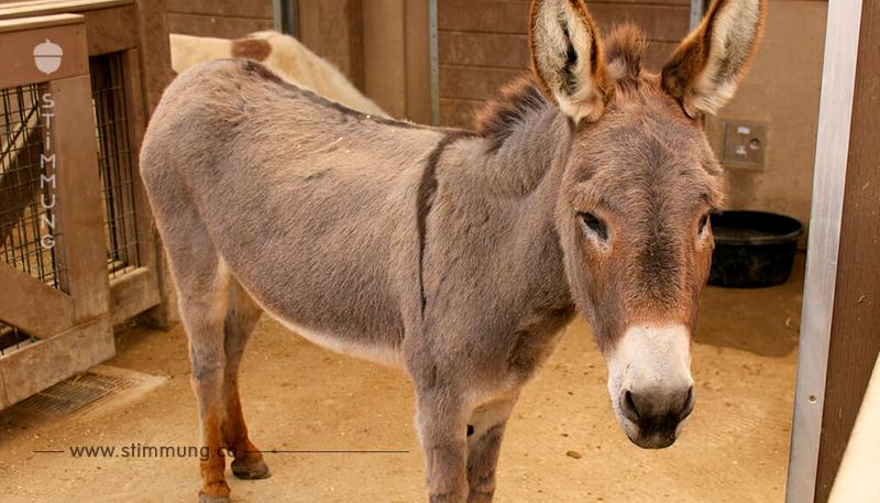 Tierquäler-Monster vergewaltigt Esel bis zur Bewusstlosigkeit – Tierschützer sind in Rage