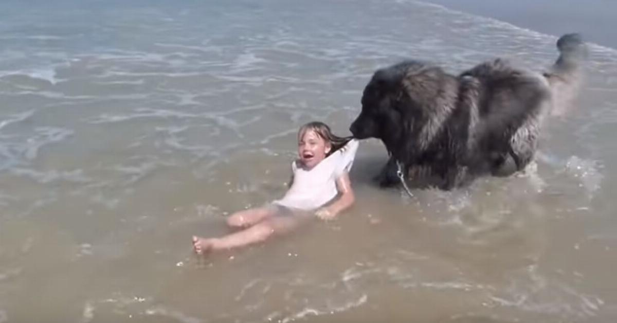 Video: Besorgter Hund zieht Mädchen an den Strand.