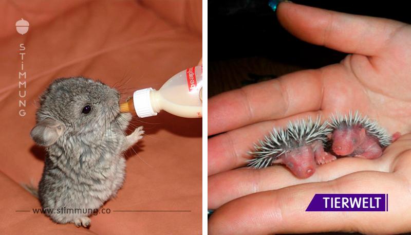 20 Tiere, die du kaum als Neugeborene gesehen hast