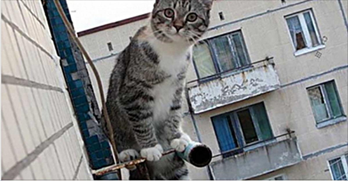 Das Kind fiel aus dem 5. Stock, um die Katze zu retten ... ,,Hab keine Angst, Onkel ...,,
