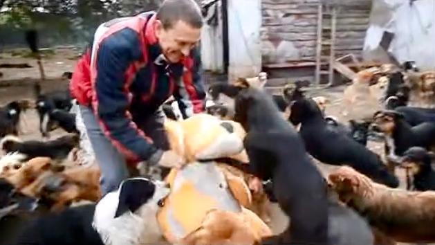 Es war ihm sehr schwer zu sehen, wie heimatlose Hunde leiden ... Und hat 450 von ihnen gerettet!