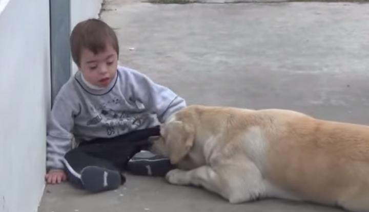 Der Labrador traf ein Kind mit Down-Syndrom. Die Reaktion des Hundes ist erstaunlich!