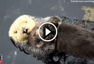 Der lustige Otter und ihr Junges wurden die Stars des Netzes. Sie sind so süß!