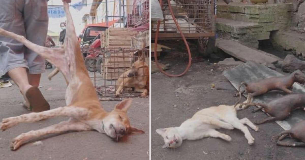 Lebendig verbrannt: Tierschützer filmen die Grausamkeit auf Indonesiens Fleischmärkten