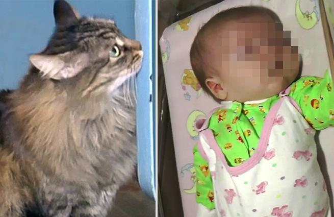 Mutter warf das Baby in der Kälte, damit das Kind starb. Aber sieh nur, was diese Katze gemacht hat!