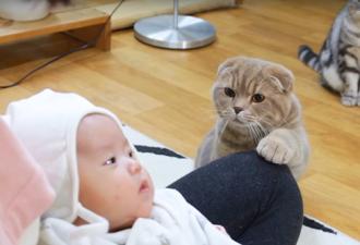 Die Besitzerin zeigte den Katzen ein neugeborenes Baby, ihre Reaktion ist ETWAS!