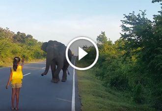 Ein kleines Mädchen kontrolliert das Verhalten des wilden Elefanten!
