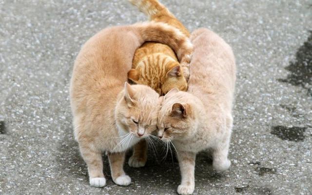 Bilder von süßen Paaren unter wilden Tieren bestätigen, dass es Liebe wirklich gibt!
