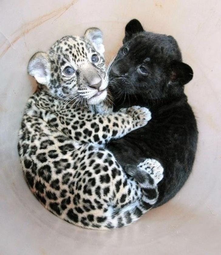 Auswahl der charmantesten Babys von wilden Tieren. Milot!