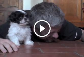 Die erste Bekanntschaft des Besitzers mit seinem Hund. Der süßeste Hund der Welt!