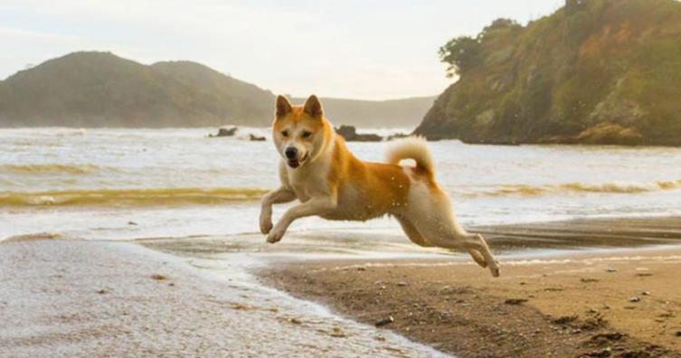 Kennt ihr schon Lulu, die klügste Hunde-Schauspielerin der Welt?