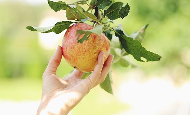 Vitaminbombe zum Anbeißen: Was Äpfel gesund macht