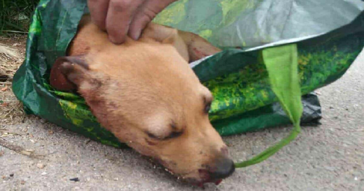 Welpe halbtot geprügelt und in Müllcontainer entsorgt: Polizei schnappt 20 Jährigen Tierquäler
