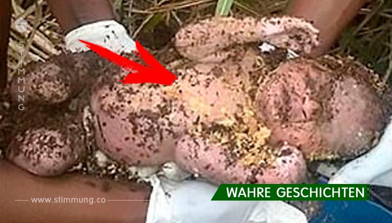Mutter hat das neugeborene Kind begraben, in der Hoffnung, dass er sterben würde. Aber trotz allem überlebte das Kind, nachdem es 3 Tage in seinem Grab gelegen hatte!