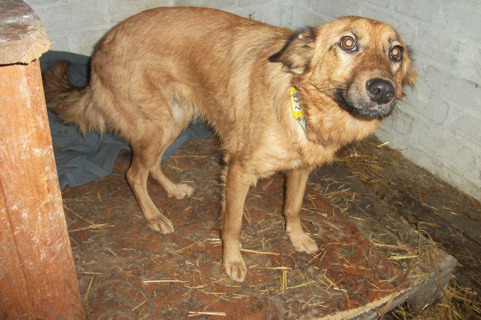 Die Besitzer kauften eine neue Wohnung, aber da war kein Platz für den Hund ... Er verhungerte einfach an der Tür des verlassenen Hauses.