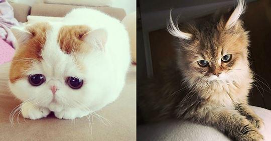 Das sind die charmantesten Katzen! Sie können alle eiserne Herzen zum Schmelzen bringen!