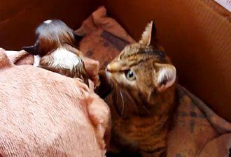 Sie brachten der Katze und ihren Kätzchen einen Welpen. Und nun beobachte ihre Reaktion!