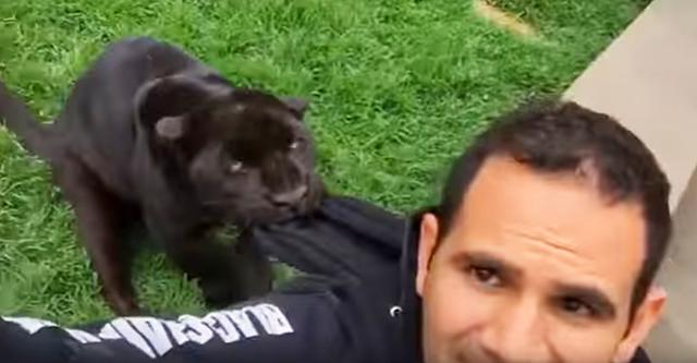 Der Mann machte ein Video mit seiner Kamera..., plötzlich hat ihn ein Panther angegriffen! Das ist etwas!