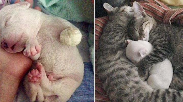 Der Welpe blieb ohne Pfote und überlebte dank einem Wunder, es lohnt sich, zu sehen, wie die Katzen und Hunde ihn pflegen. Das ist die wahre Liebe!