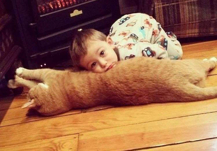 Dieses Tier wurde allein geblieben, niemand möchte sie nehmen, und dann wurde diese rote Katze der Schutzengel für das Baby ...