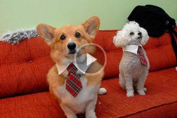 Hundespiele oder wie man auf Youtube 22 Millionen Aufrufe sammeln kann!