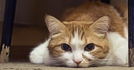 Tierquäler missbraucht Katze als lebendige Zielscheibe – durchbohrt sie mit Sportpfeil