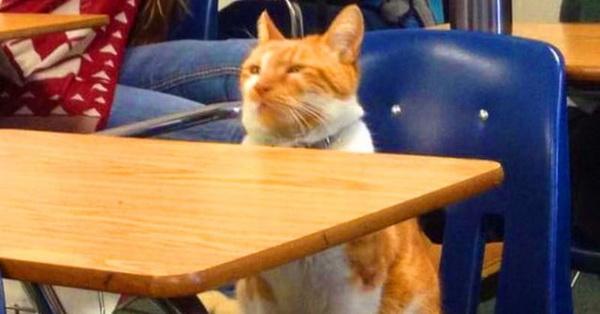 Katze als ein Wissenschaftler! In Kalifornien hat sich die Katze an eine höhere Bildungseinrichtung immatrikuliert