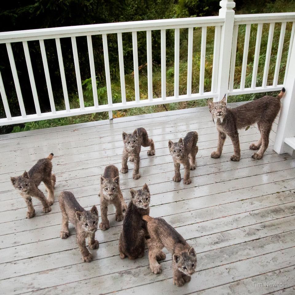 Ein Mann wachte von seltsamen Geräuschen auf der Veranda auf ...